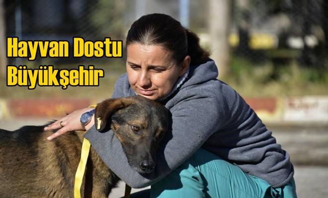 Hayvan Dostu Büyükşehir