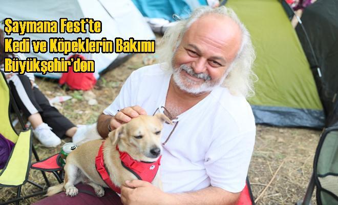 Şaymana Fest'te Kedi ve Köpeklerin Bakımı Büyükşehir'den