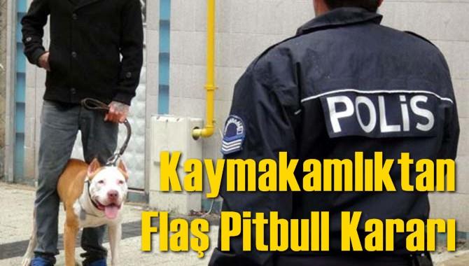 Kaymakamlıktan Flaş Pitbull Kararı