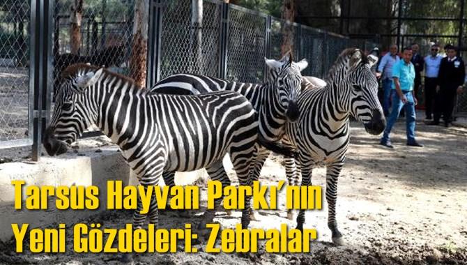 Tarsus Hayvan Parkı'nın Yeni Gözdeleri: Zebralar