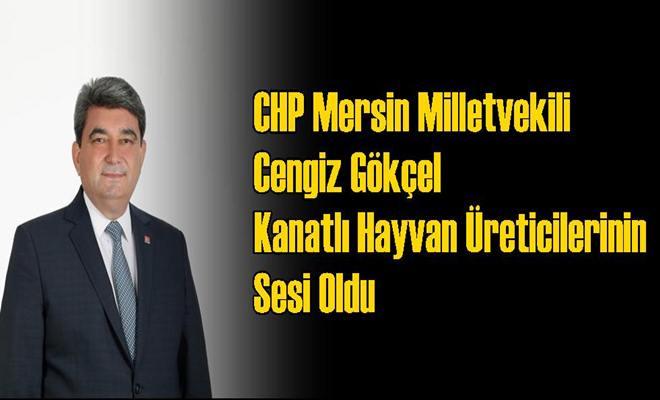 CHP Mersin Milletvekili Cengiz Gökçel Kanatlı Hayvan Üreticilerinin Sesi Oldu