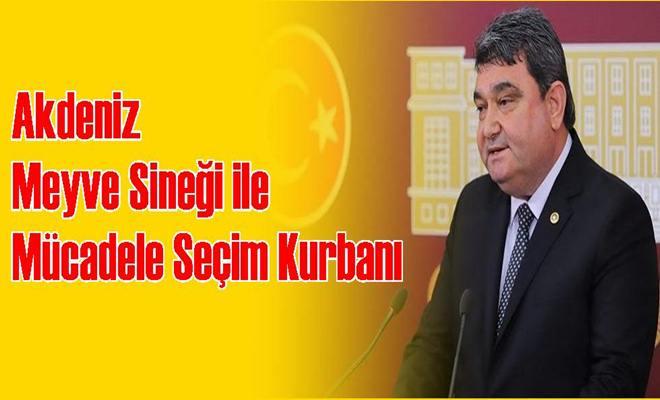 CHP'li Gökçel: Akdeniz Meyve Sineği ile Mücadele Seçim Kurbanı