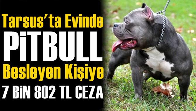 Tarsus'ta Pitbull Besleyen Kişiye Para Cezası