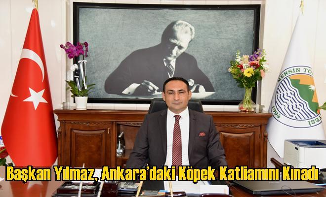 Başkan Yılmaz, Ankara'daki Köpek Katliamını Kınadı