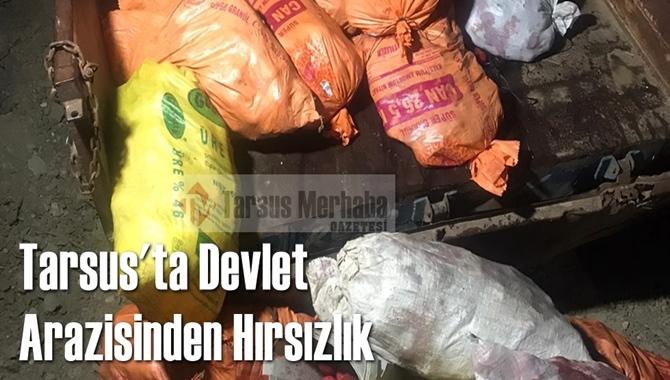 Tarsus'ta Devlet Arazisinden Hırsızlık