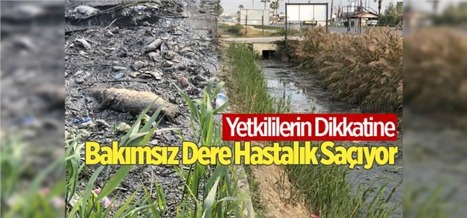 Tarsus'ta Bakımsız Dere Hastalık Saçıyor