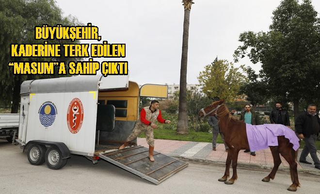 Masum, Tarsus Hayvan Parkı'na Götürüldü