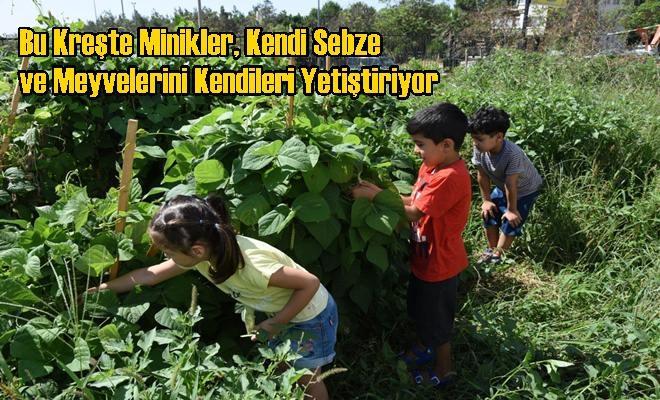 Bu Kreşte Minikler, Kendi Sebze ve Meyvelerini Kendileri Yetiştiriyor