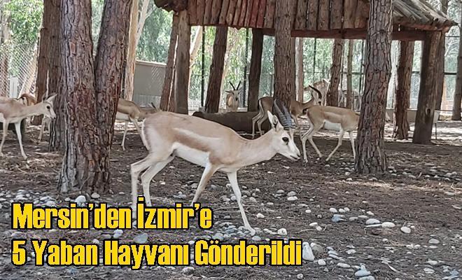 Mersin'den İzmir'e 5 Yaban Hayvanı Gönderildi