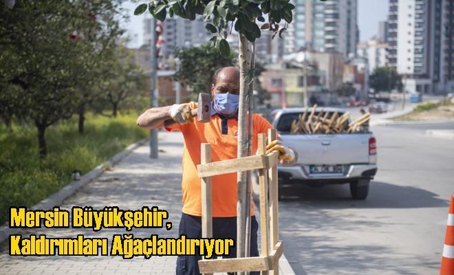 Mersin Büyükşehir, Kaldırımları Ağaçlandırıyor