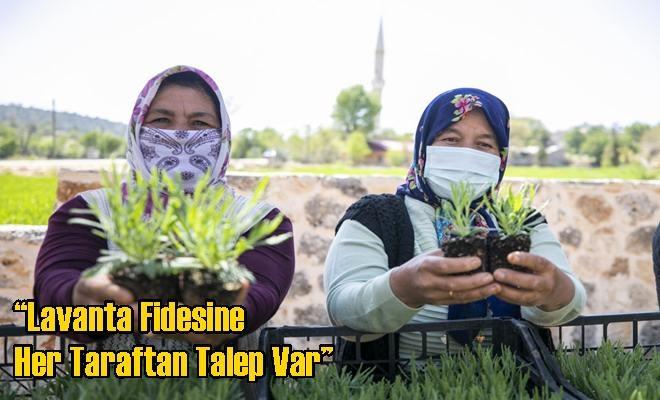 """Lavanta Fidesine Her Taraftan Talep Var"""
