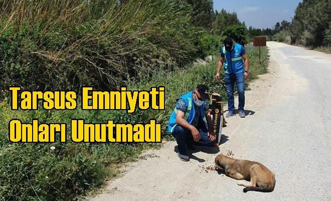 Tarsus Emniyet Müdürlüğü Ekipleri Sokak Hayvanlarını Sahipsiz Bırakmadı