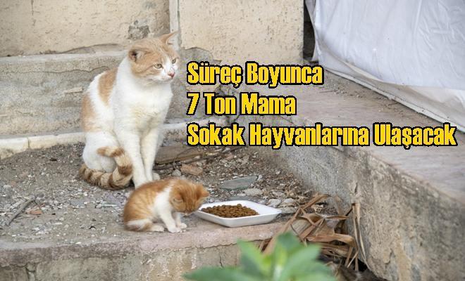 Süreç Boyunca 7 Ton Mama Sokak Hayvanlarına Ulaşacak