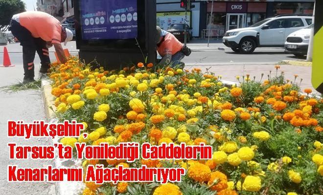 Büyükşehir, Tarsus'ta Yenilediği Caddelerin Kenarlarını Ağaçlandırıyor