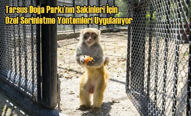 Tarsus Doğa Parkı'nın Sakinleri İçin Özel Serinletme Yöntemleri Uygulanıyor